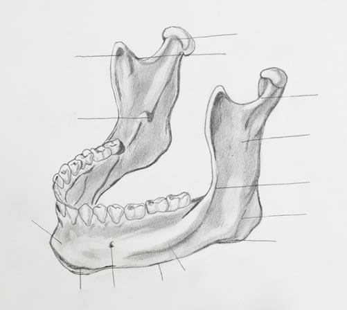Effects on Jaw from Bruxism